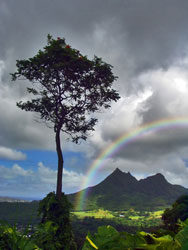rainbow4-6393070