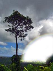 rainbow5-7668497