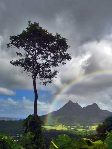 rainbow6-5160003